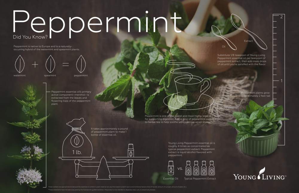 peppermint-infographic